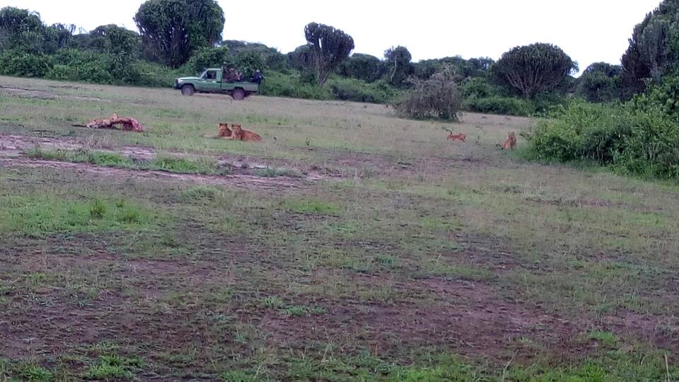NEW PRIDE OF LIONS OCCUPY HAMUKUNGU
